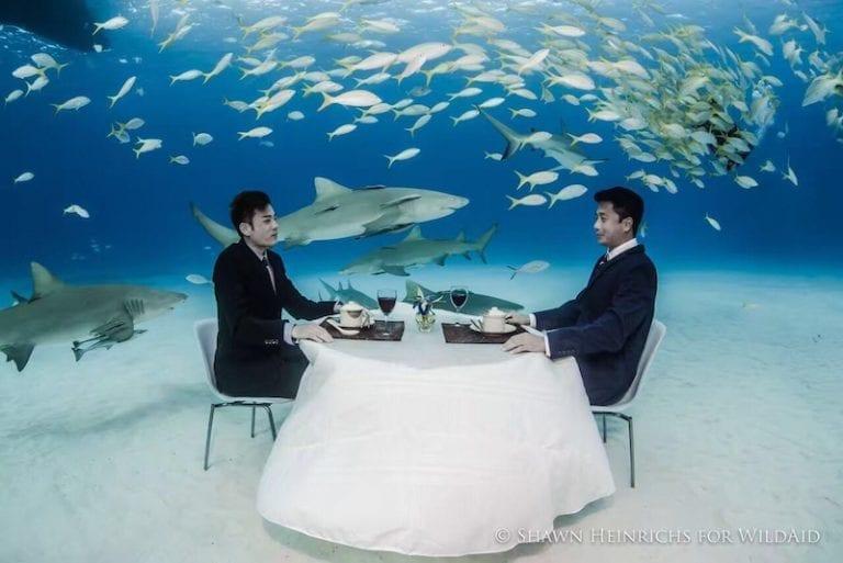 《李光洁:与鲨共舞》